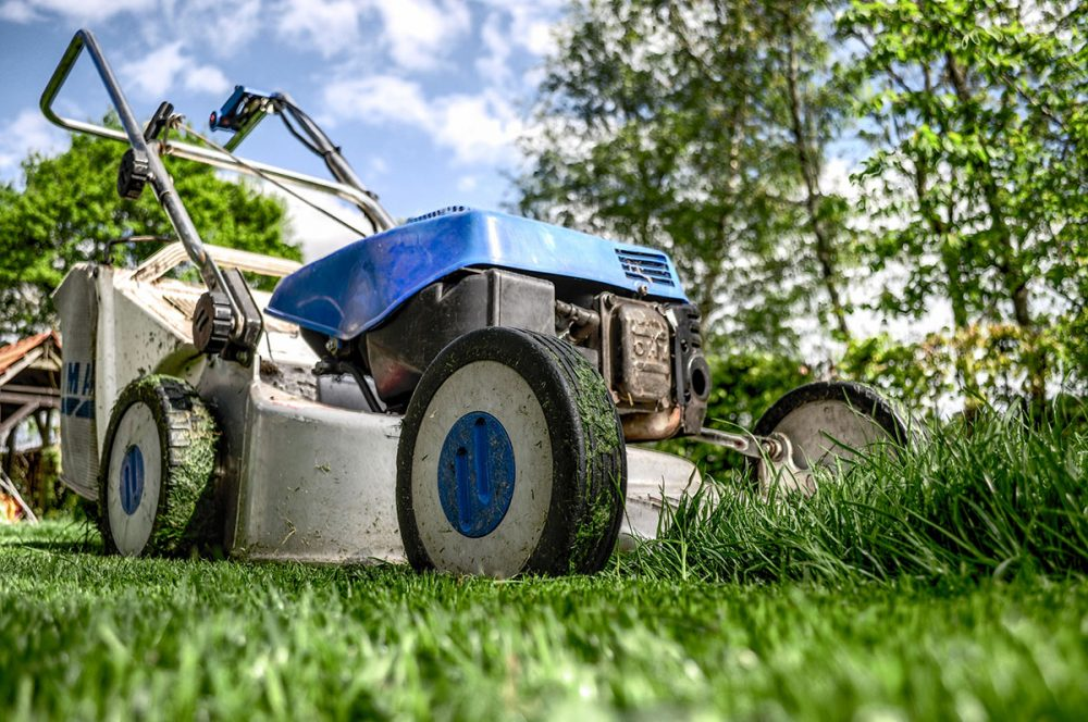 Is the size of your lawn a status symbol or a societal bad habit?